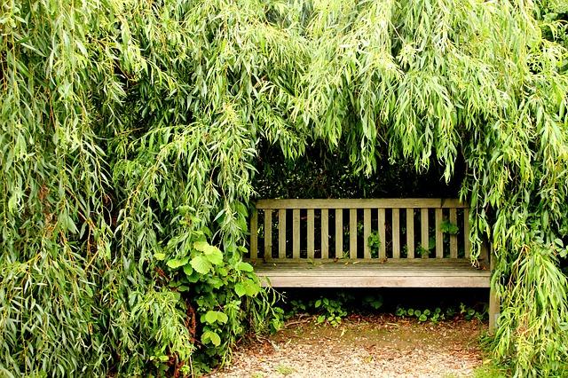 zahradní lavička pod stromem