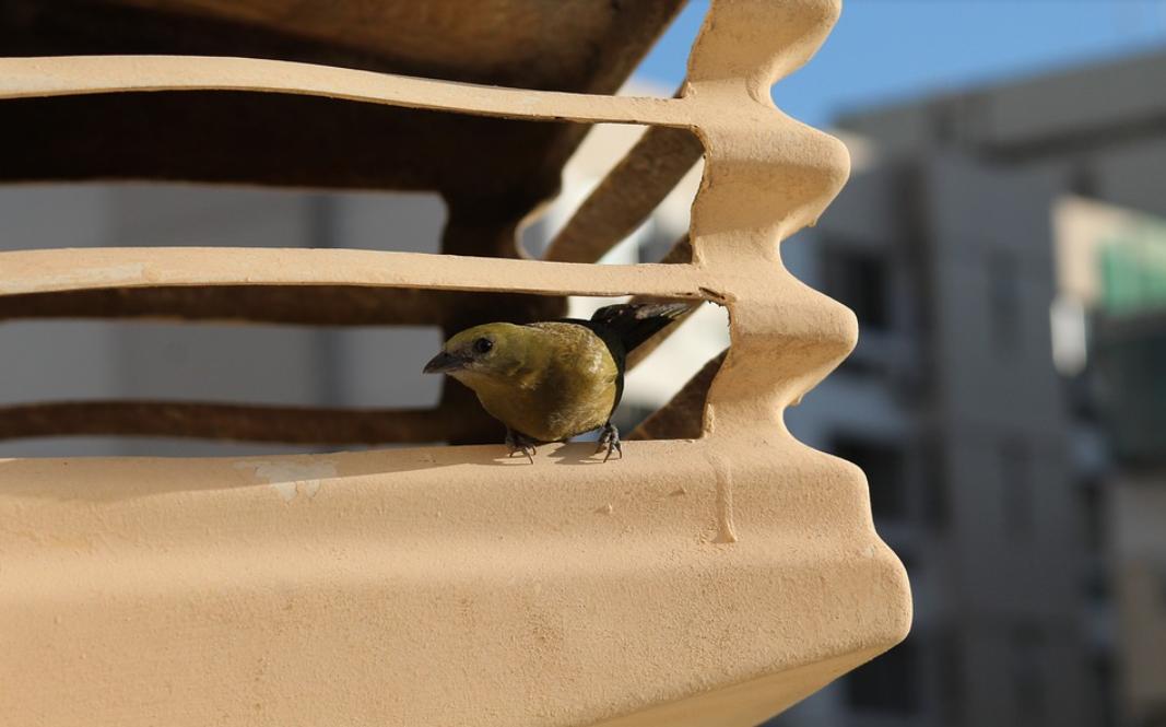 pták a klimatizace